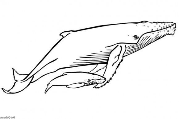 raskraski-zhivotnyh--ryby--34