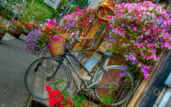 velosiped-v-sadu-5