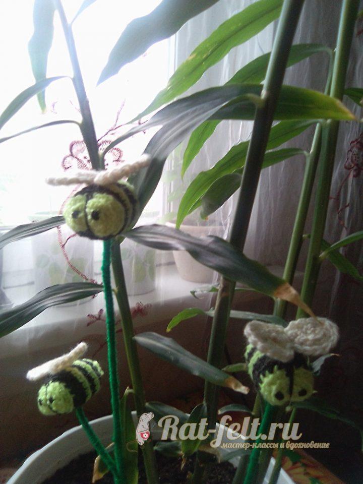 пчела для комнатных растений