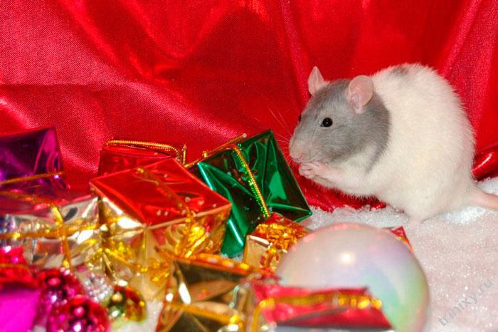 По восточному календарю Крысы