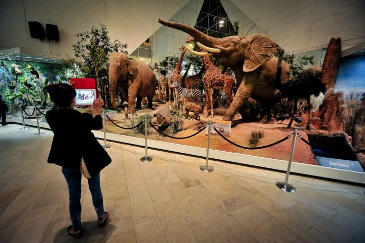 Бесплатные музеи на новогодние каникулы 2019 - КалендарьГода картинки