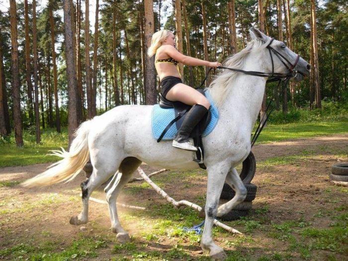 В Дании мужем стал конь
