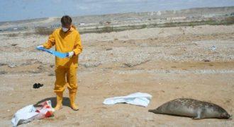 Миниатюра к статье Катастрофа на Каспийском море в 2019 году