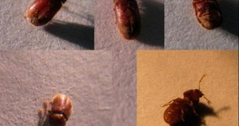 Миниатюра к статье Способы избавиться от жучков в сухих продуктах