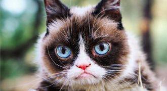 Миниатюра к статье Умерла знаменитая кошка Grumpy cat