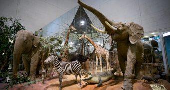 Миниатюра к статье Бесплатные музеи на новогодние праздники в 2019 году