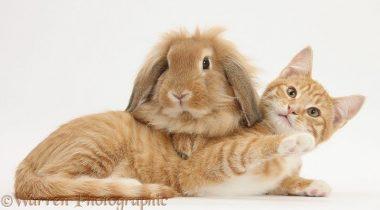 Миниатюра к статье 18 милых фотографий дружбы животных от Марка Тейлора