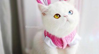 Миниатюра к статье Кошка, которая заворожит вас своими глазами