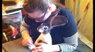 Миниатюра к статье Чудесный мир войлочных животных от Yvonne Herbst
