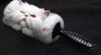 Миниатюра к статье Как избавиться от кошачьей шерсти на мебели и одежде: лучшие способы