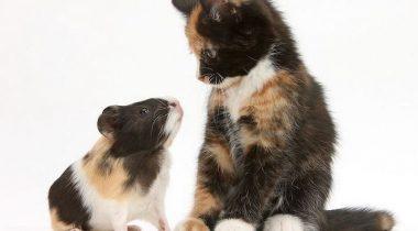 Миниатюра к статье «Кража личности» — очаровательные фото пар животных с одинаковым окрасом от Марка Тейлора