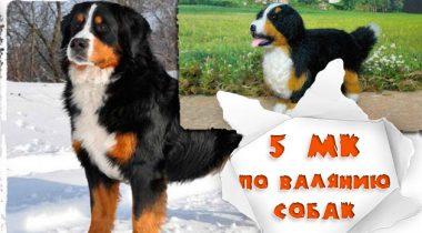 Миниатюра к статье Сухое валяние собак на каркасе. 5 небольших мастер-классов