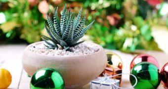 Миниатюра к статье Простые и недорогие вещи, которые принесут удачу в каждый дом