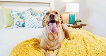Миниатюра к статье Собака в квартире: как быстро избавиться от запаха